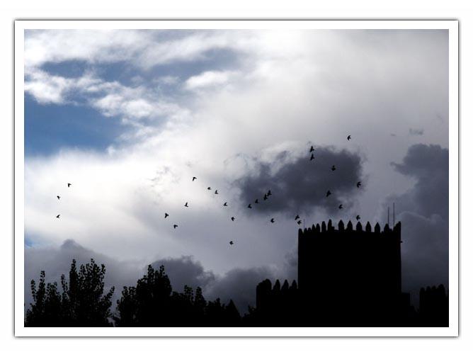 """фото """"to the birds"""" метки: разное,"""