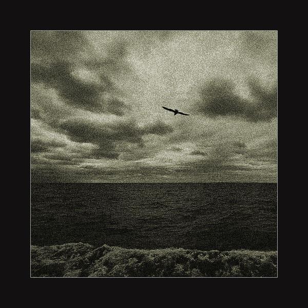 """фото """"Чайка режет высоту"""" метки: пейзаж, вода, облака"""