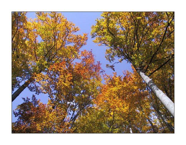 """фото """"Simple Autumn Postcard"""" метки: пейзаж, лес, осень"""