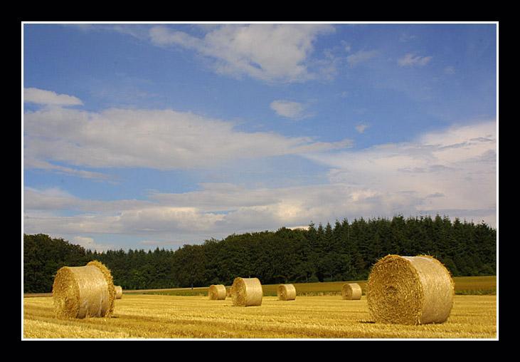 "фото ""country side"" метки: пейзаж, лето"