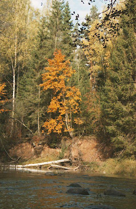 "фото ""River and fall"" метки: пейзаж, вода, осень"