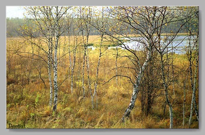 """фото """"У озера 2"""" метки: пейзаж, осень"""