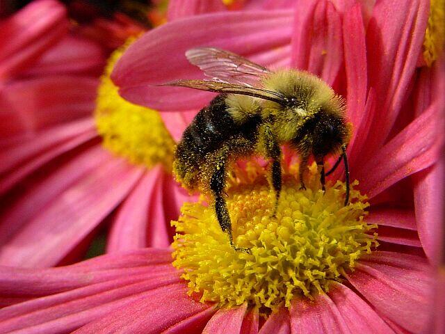 """фото """"Bee`s Life"""" метки: макро и крупный план,"""
