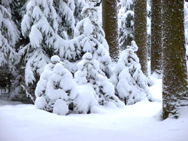 """фото """"Тишина..."""" метки: фотомонтаж, пейзаж, зима"""