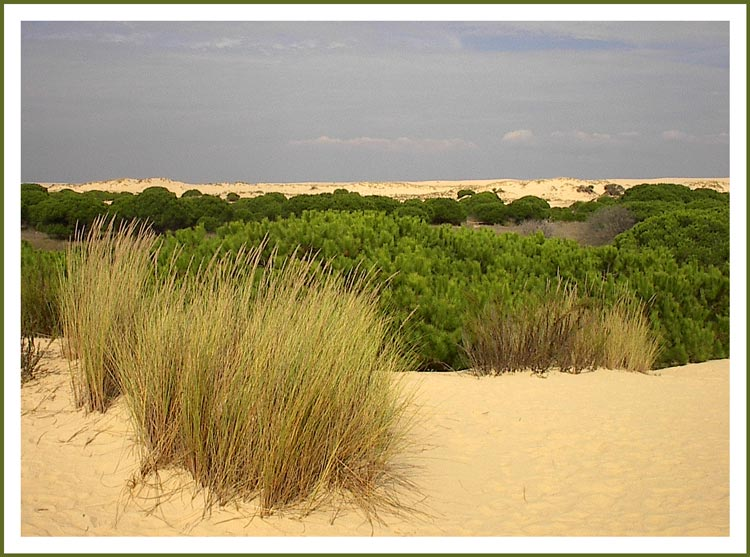 "фото ""Donana"" метки: пейзаж, природа, цветы"