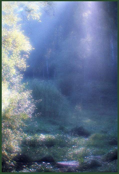 """фото """"Блестки утренней росы"""" метки: пейзаж, лес"""