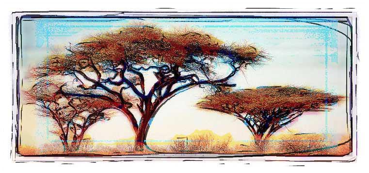 """фото """"Trees of The Savanne, Kenya"""" метки: фотомонтаж, пейзаж, лес"""