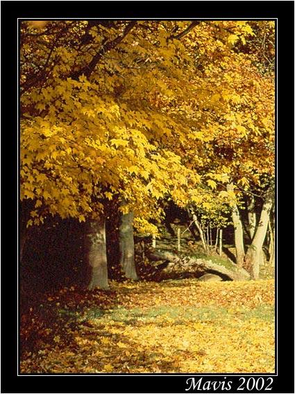 """фото """"Golden October"""" метки: природа, пейзаж, осень, цветы"""