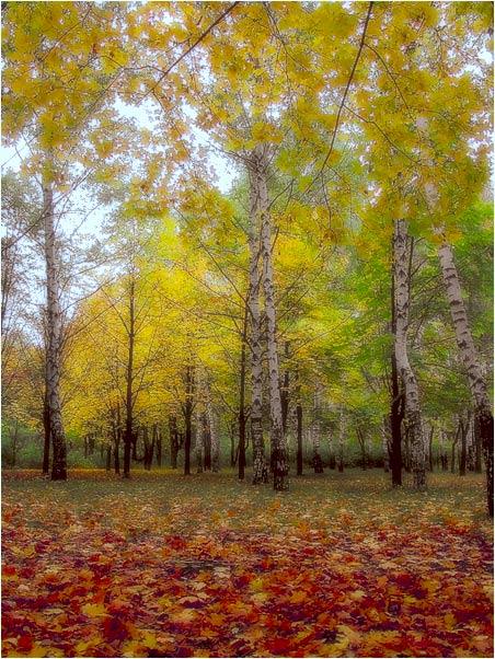 """фото """"Ах, ОСЕНЬ!"""" метки: пейзаж, природа, осень, цветы"""