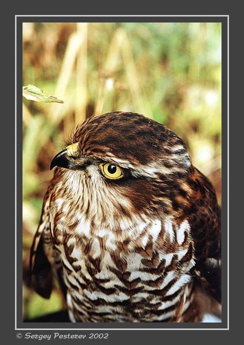 "фото ""Птичка"" метки: природа, дикие животные"