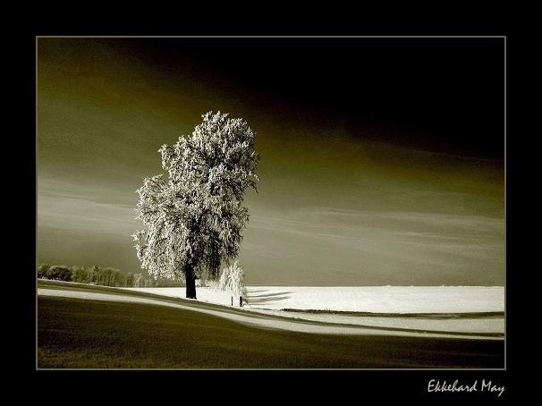"фото ""silence [resubmission]"" метки: пейзаж, зима"