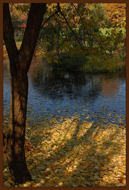 """фото """"Утро. Замерзший пруд."""" метки: пейзаж, природа, осень"""