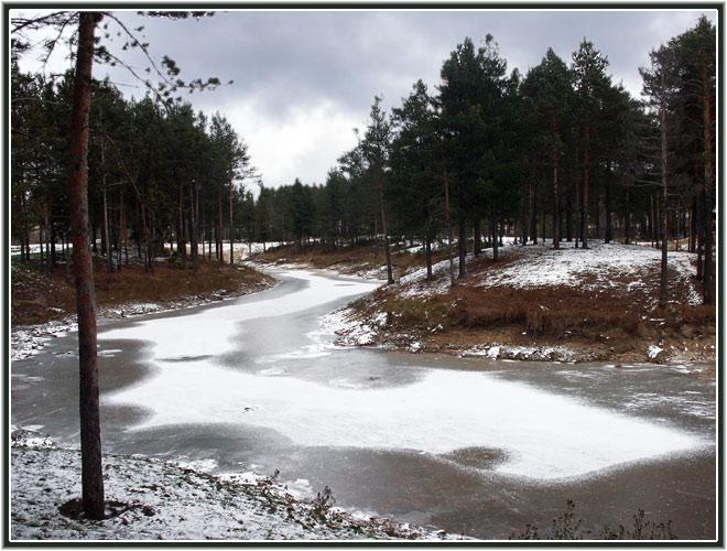 "фото ""Первый снег"" метки: пейзаж, зима, лес"