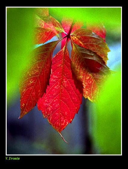 """фото """"Краски осени."""" метки: природа, разное, цветы"""