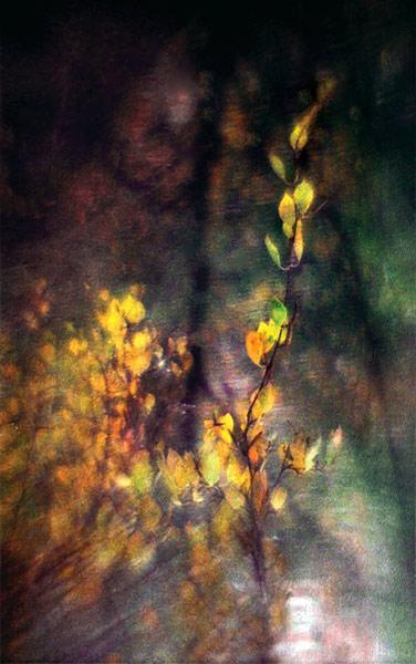 "фото ""из осени - обратно в лето"" метки: пейзаж, осень"