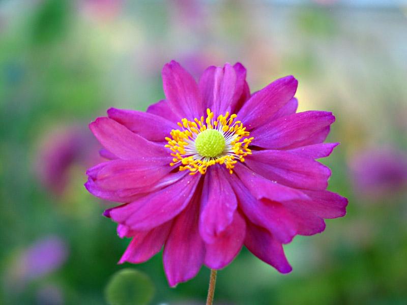 "фото ""just flower"" метки: природа, цветы"