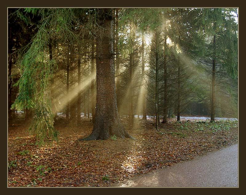 """фото """"Спрятавшееся солнышко."""" метки: пейзаж, природа, осень, цветы"""