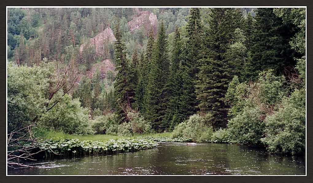 "фото ""Базаиха"" метки: разное, пейзаж, лес"