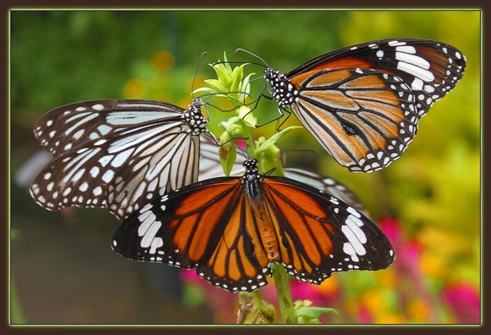 """фото """"Бабочки"""" метки: природа, макро и крупный план, насекомое"""