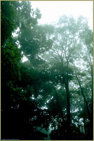 "фото ""The Last Sommer Fog"" метки: пейзаж, лес, осень"