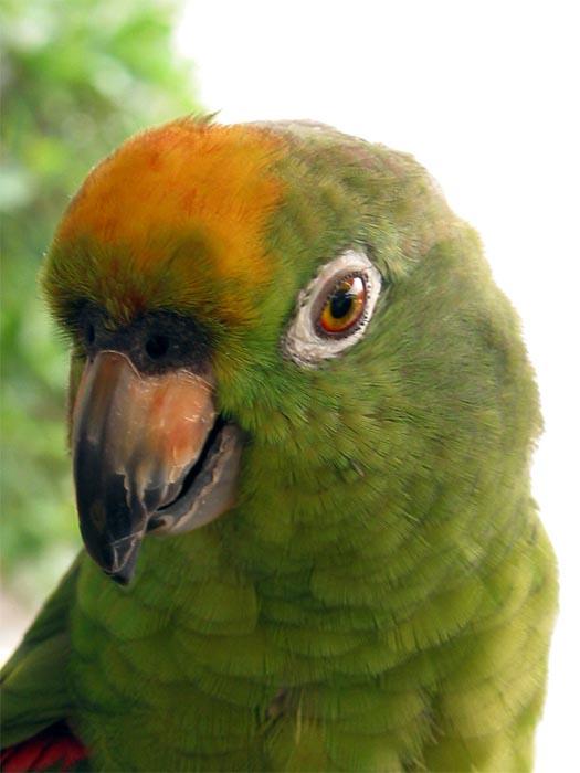 "фото ""The bird"" метки: природа, домашние животные"