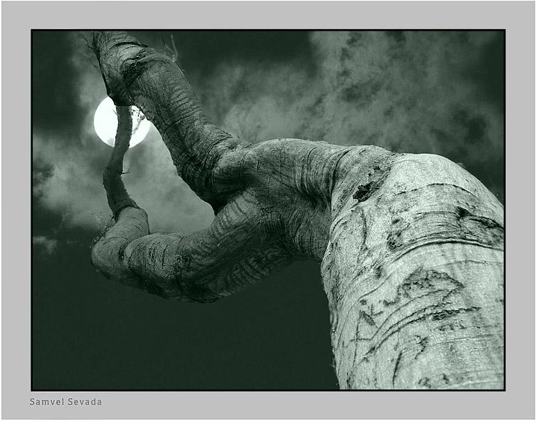 "фото ""MOONLIGHT SONATA"" метки: разное,"