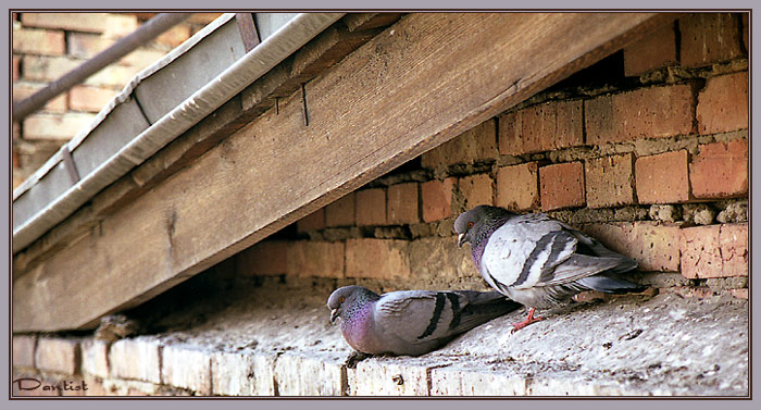 """фото """"Рай под крышей"""" метки: природа, дикие животные"""