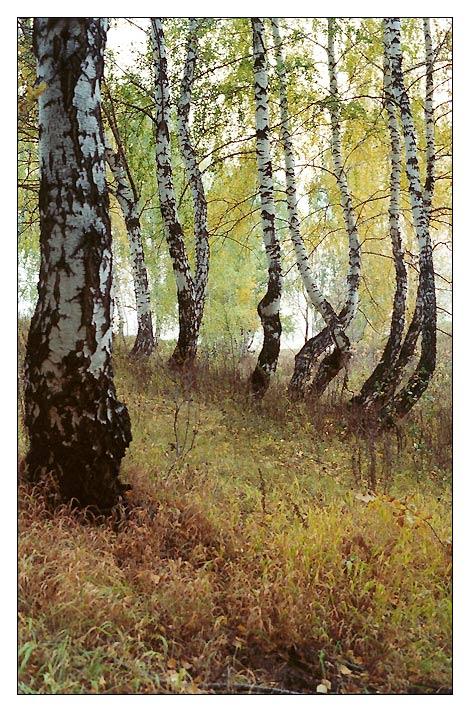 "фото ""Осенние зарисовки #2"" метки: пейзаж, осень"