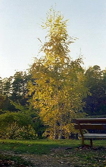 "фото ""Осенняя зарисовка"" метки: пейзаж, природа, осень, цветы"