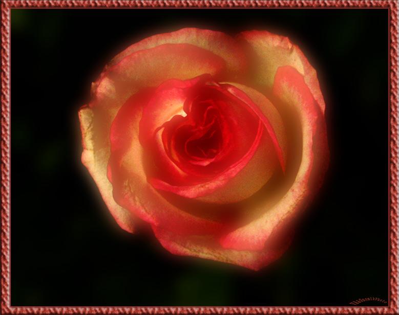"""фото """"Имя Розы"""" метки: природа, жанр, цветы"""