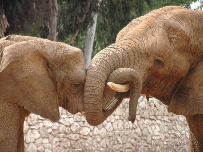 """фото """"Семейные истории 1"""" метки: природа, дикие животные"""