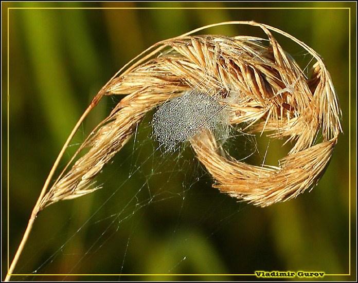 """фото """"Воздушный замок"""" метки: природа, макро и крупный план, насекомое"""