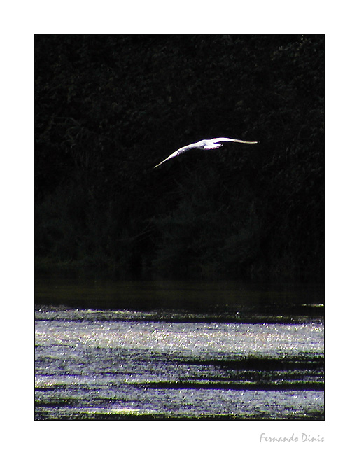 """фото """"Flying in the dark one"""" метки: природа, дикие животные"""
