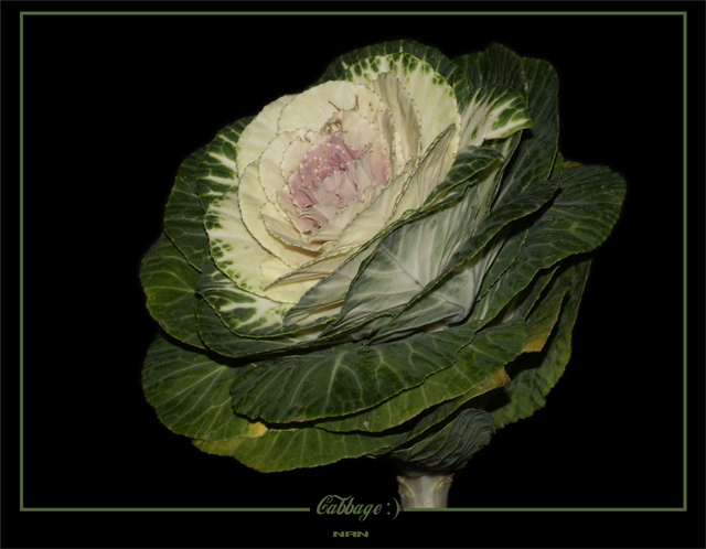 "photo ""Cabbage :)"" tags: misc.,"