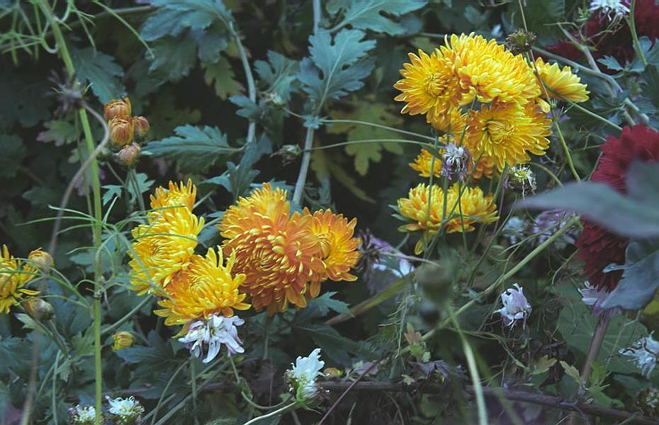 """фото """"Осенний этюд (2)"""" метки: природа, цветы"""