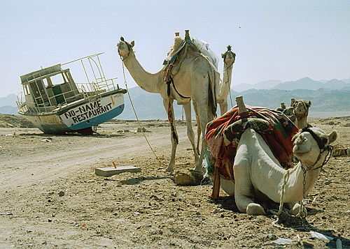 "photo ""Desert ships"" tags: travel,"