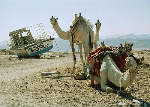 "фото ""Корабли пустыни"" метки: путешествия,"