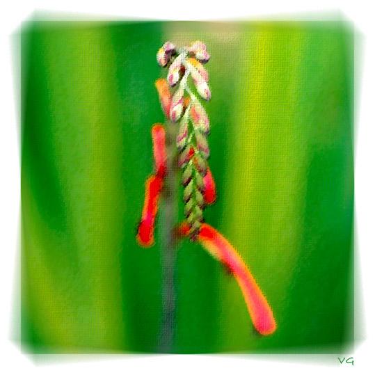 "фото ""Antipodean Spring"" метки: природа, фотомонтаж, цветы"