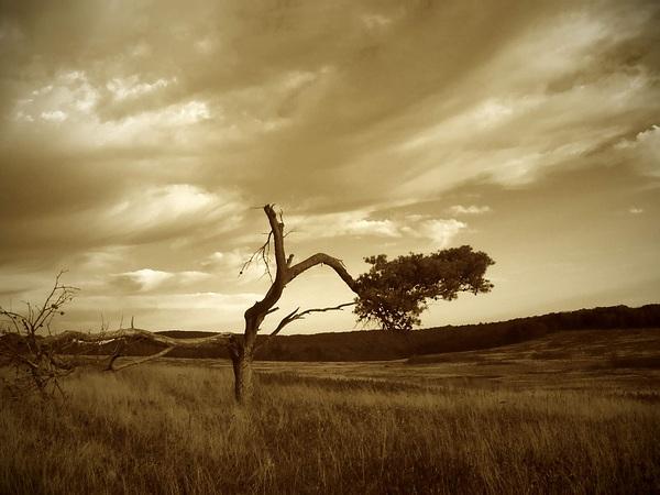 "photo ""Skyland Meadows"" tags: nature,"