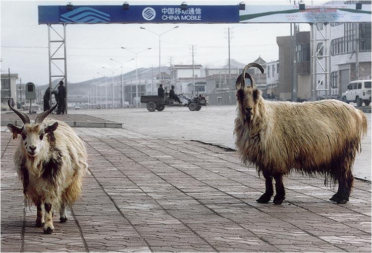"""фото """"China Mobile - связь для всех"""" метки: юмор,"""
