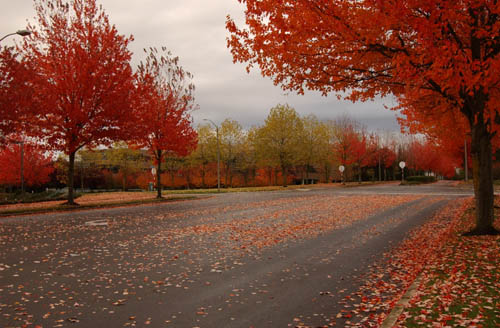 "фото ""Early morning & red leaves"" метки: природа, цветы"