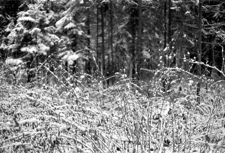 """фото """"natural chaos"""" метки: абстракция, пейзаж, зима"""