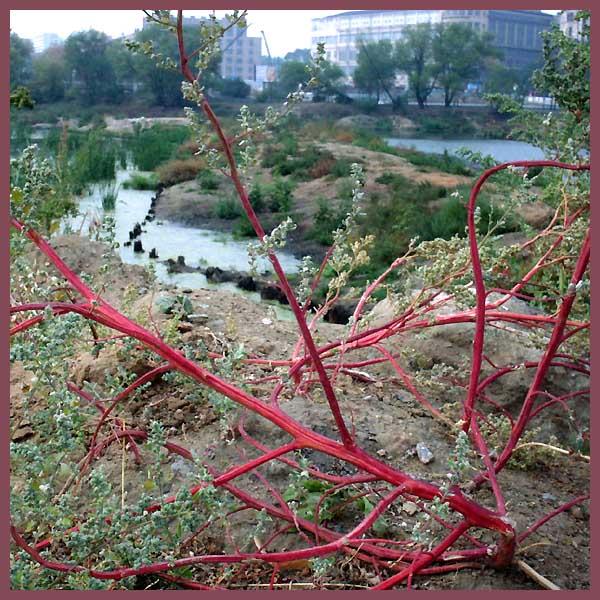 """фото """"red plant"""" метки: пейзаж, вода, лето"""