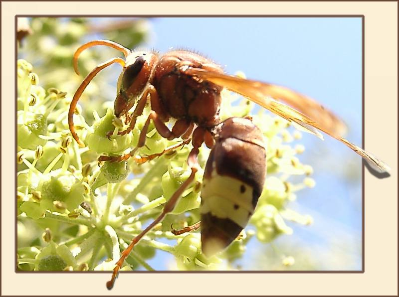 "photo ""Working hardly"" tags: macro and close-up, nature, insect"