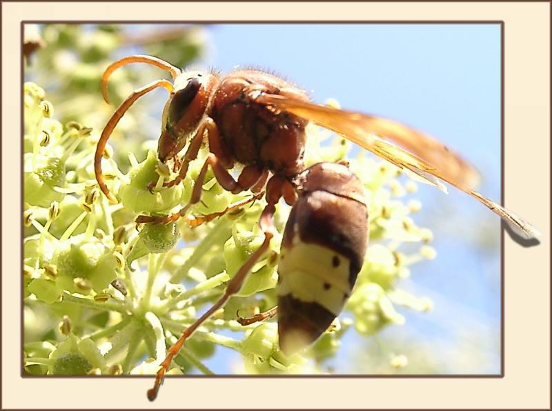 """фото """"Working hardly"""" метки: макро и крупный план, природа, насекомое"""