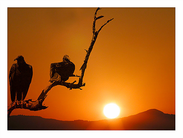"photo ""The vultures"" tags: montage, landscape, sunset"