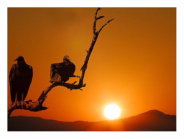 "фото ""The vultures"" метки: фотомонтаж, пейзаж, закат"