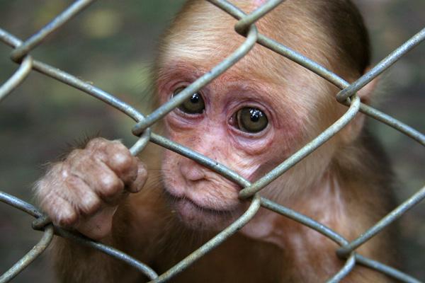 "photo ""Zoo"" tags: nature, wild animals"