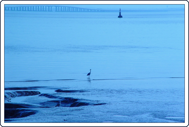 "photo ""Sentinels in blue"" tags: landscape, nature, water, wild animals"