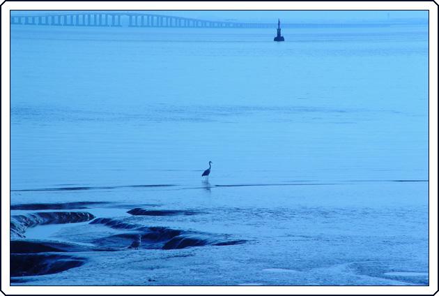 "фото ""Sentinels in blue"" метки: пейзаж, природа, вода, дикие животные"